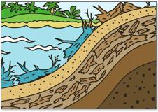植物 の上に砂や泥がつ もっていく様子