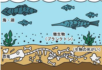 大昔の海の底